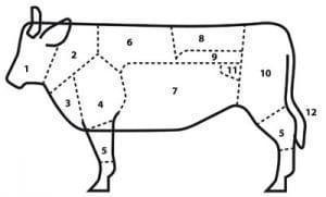 Onderdelen van koe (rund)