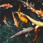 Vissen in dezelfde vijver [Gwen and the City]