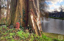 Elfendeurtje Kennemerpark Alkmaar