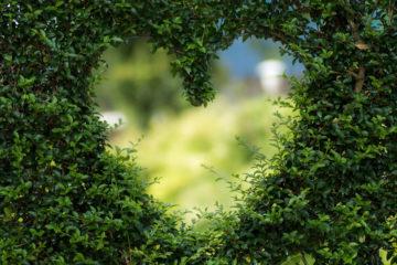 Hart in groene heg