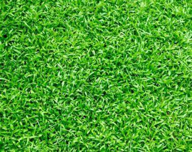 Gras - voetbalveld