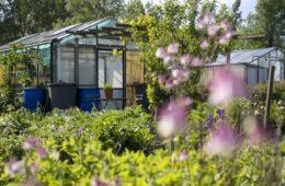 Een plaatje: moestuinieren in de lente