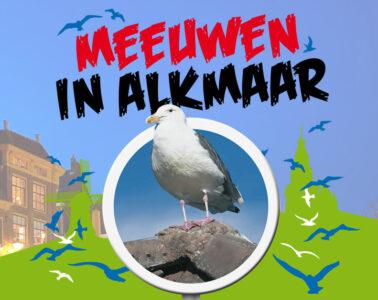 Meeuwen in Alkmaar